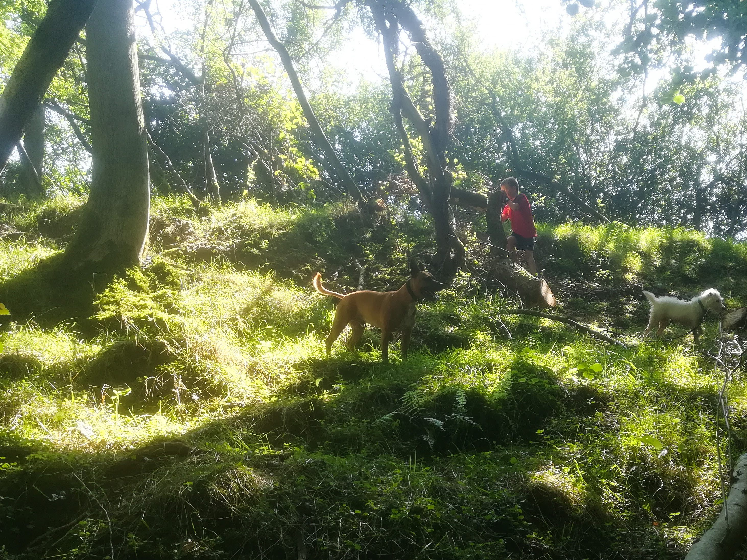 Dogs and children playing in the woods